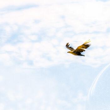 Flyger för högt