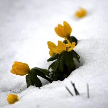 Våren-Aprilväder