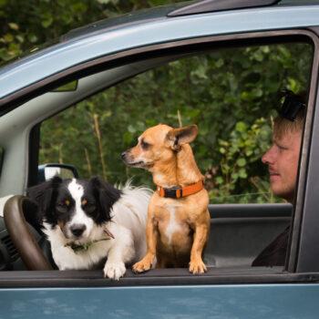 Transporter - Hundförare