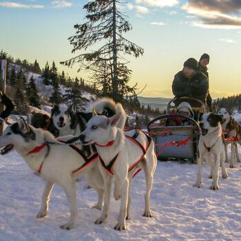 Transporter - Hundspann