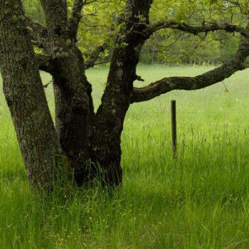 Vårgrönt