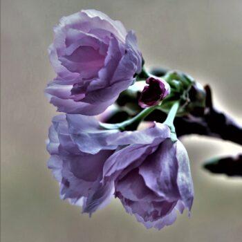 Våren - så skir